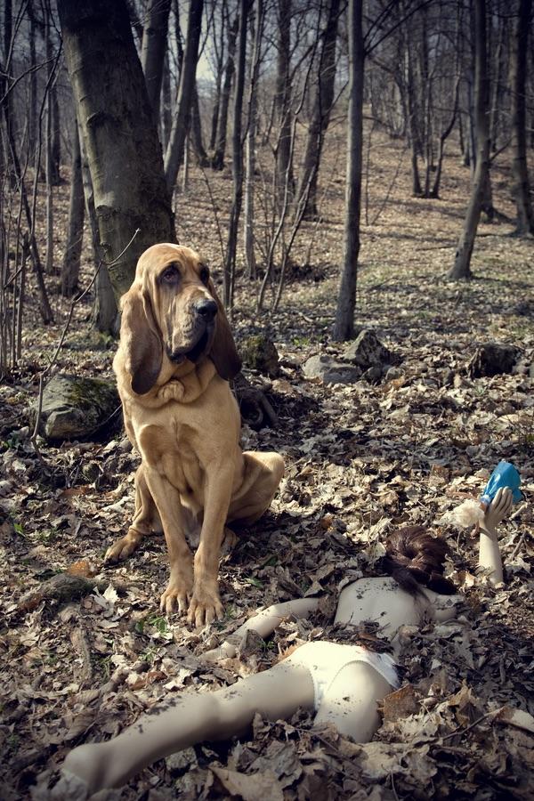 Play with me / L'invito ci piace pensare sia quello rivolto dal cane all'osservatore sulla scia dell'empatia generate dalla circostanza di essere entrambi vivi ed in grado di fuggire dall'inquietante scenario.